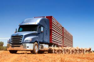 Nuovo Freightliner Cascadia Australia